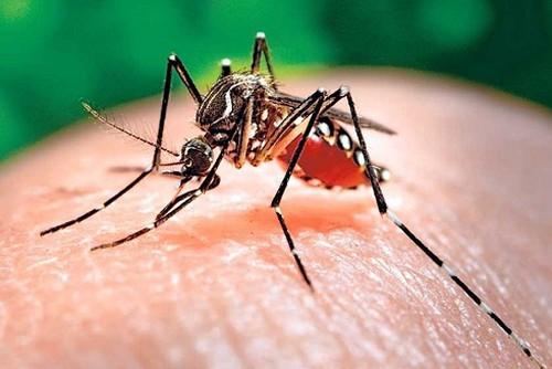 Phân biệt và xử lý sốt xuất huyết và sốt virus